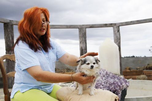 Golden reiki healing nz animal tracy wood